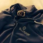 tiny_raccoon_glowforge
