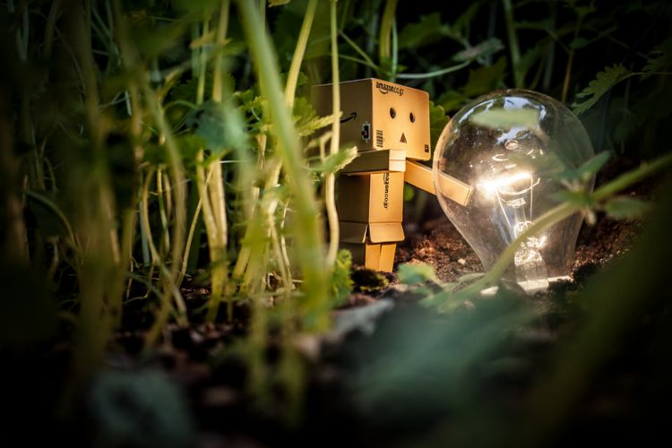 danbo finds a lightbulb