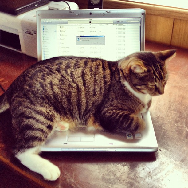 Cat is sitting on top of a laptop.
